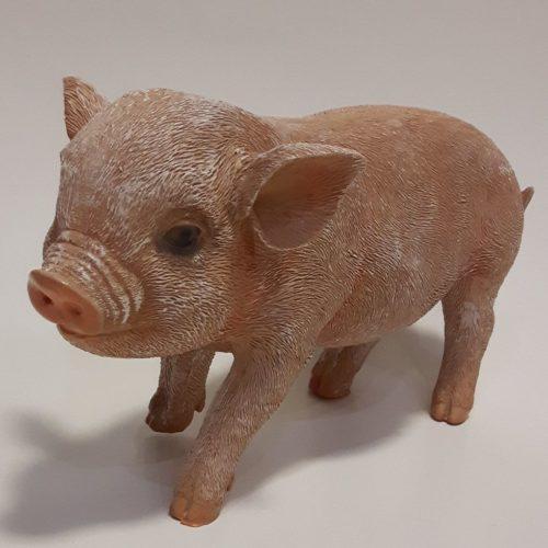 Levensecht beeldje van varken