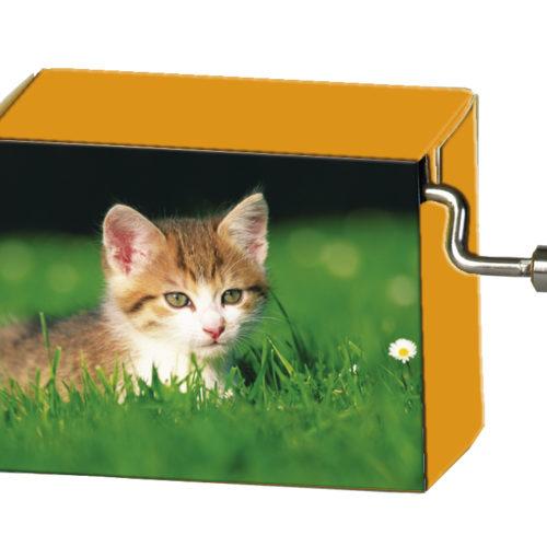 Speeldoosje dieren kitten in het gras met melodie LaLeLu