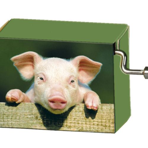 Speeldoosje dieren varken op hek met melodie Happy Birthday