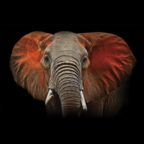 Onderzetter set olifanten 6 verschillende van hout